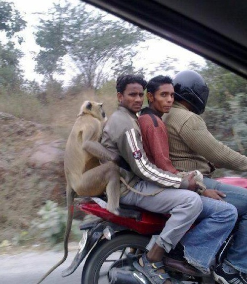 Caption that: 'You at the back there, stop monkeying around.'