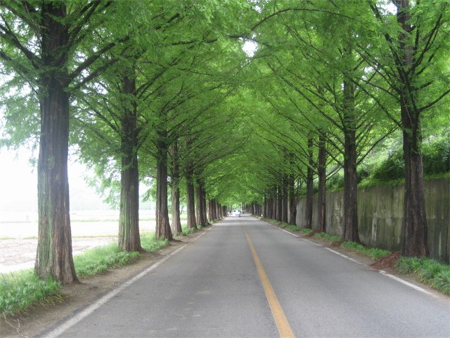 Trees: the latest speed reducing initiative