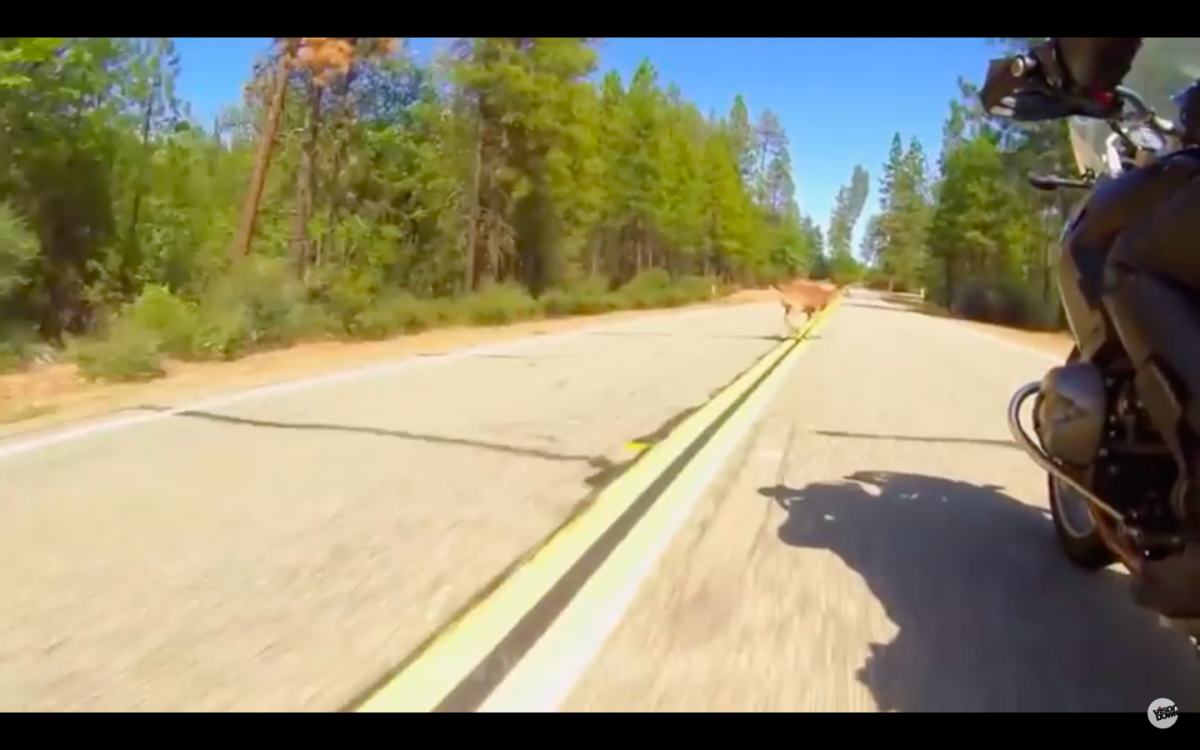 The Top 5 Craziest Bike Clips You've Ever Seen...