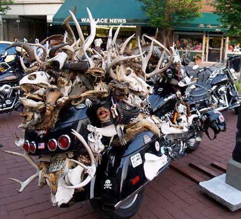 Hells Angels arrested over deer 'plundering' | Visordown